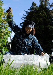 BREMERTON, Wash. (April 25, 2014) A sailor assigned to Naval Base Kitsap (NBK) Bremerton clears undesired brush from the grounds outside the command building during a base clean for Earth Day.  Earth Day allows team buildings across commands, military services and government agencies, and the local communities.  (U.S. Navy photo by Mass Communication Specialist 2nd Class Jamie Hawkins/Released)