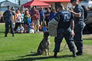 "Naval Air Station Whidbey Island joins the City of Oak Harbor in the annual National Night Out at Windjammer Park on Aug. 5, 2014 to bring the public together with law enforcement and emergency services as part of crime and drug prevention awareness. Military working dog ""Fien"" with handler Master-at-Arms (MA) 3rd Class Eric Heale (right) and MA1 Justin Dunn perform a demonstration for the crowd at Windjammer Park. The event generates support for local anti-crime programs; strengthens neighborhood spirit and police-community partnerships and sends a message to criminals that neighbors are organized and watching."