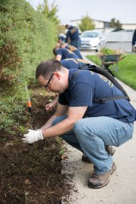 Sept.9, 2014). Chief (select) Master-at-Arms Joseph Belurgi, a native of Phoenix, assigned to Naval Base Kitsap Security pulls weeds at Washington Veterans Home during Phase II of CPO 365. More than 70 Chief Petty Officers and Chief selects came out to help rake leaves, pull weeds and trim bushes around the veterans home campus. (U.S. Navy photo by Mass Communication Specialist 3rd Class William Blees/Released)