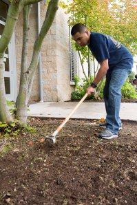 (Sept.9, 2014). Chief (select) Corpsman Chris Vardeleon, a native of San Diego, assigned to Naval Hospital Bremerton performs yard work at Washington Veterans Home during Phase II of CPO 365. More than 70 Chief Petty Officers and Chief selects came out to help rake leaves, pull weeds and trim bushes around the veterans home campus. (U.S. Navy photo by Mass Communication Specialist 3rd Class William Blees/Released)