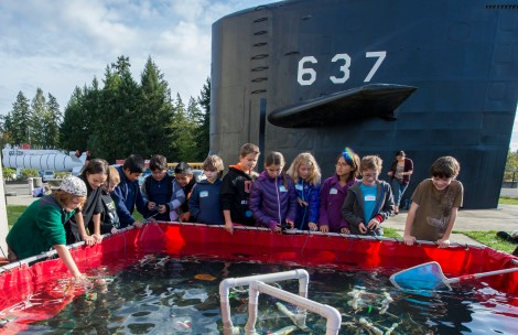 141016-N-MN975-020 KEYPORT, Wash. (October 16, 2014) Students from West Hills Science, Technology, Engineering and Math (STEM) Academy participate in a remotely operated vehicle (ROV) competition during Navy STEM day held at the Keyport Naval Undersea Warfare Museum. The one-day workshop was offered to more than 100 students who participated in a variety of hands-on STEM activities and interacted with DoD educators about ROVs. (US Navy photo by Mass Communication Specialist 2nd Class Justin A. Johndro/RELEASED)