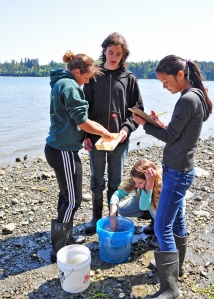 150508-N-JP801-092  PORT HADLOCK, Wash. - Eighth grade science students from Blue Heron Middle School measure a fish they caught and record the data as part of a hands-on marine science lesson. The students participated in an educational field trip to Naval Magazine Indian Island May 7-8 to learn how to conduct fisheries research work and help gather data that relates to the Kilisut Harbor restoration project. The hands-on project was led by personnel from U.S. Geological Survey's Marrowstone Marine Field Station, with support from personnel from National Oceanographic and Atmospheric Administration's National Marine Fisheries Service, U.S. Navy, Washington Department of Fish and Wildlife, and the North Olympic Salmon Coalition. (U.S. Navy photo by Liane Nakahara/Released)