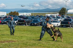 150514-N-WQ574-017 OAK HARBOR, Wash. (May 14, 2105) Master-at-Arms 2nd Class Samuel Aberson and Master-at-Arms 1st Class Justin Dunn demonstrate patrol training with military working dog Ajsa during a safety fair at Naval Air Station Whidbey Island (NASWI). NASWI hosts its annual safety fair to raise awareness on safe decision making with volunteers, pamphlets and information covering many topics including boating, food, and hunting and fishing. (U.S. Navy photo by Mass Communication Specialist 3rd Class Caleb Cooper/Released)