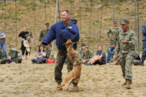 150612-N-OO032-441 SILVERDALE, Wash. (June 12, 2015) -- Lt. Col. Stephen Keane, commanding officer of Marine Corps Security Force Battalion (MCSFBn) - Bangor, dons a bite suit to demonstrate the command's military working dogs with the assistance of Master-at-Arms 2nd Class Eduardo Molina, a Chicago native assigned to MCSFBn, to a crowd of his Sailors, Marines and their spouses and family members as a part of MCSFBn's Jayne Wayne Day at Naval Base Kitsap - Bangor. Jayne Wayne Day is an annual Marine Corps tradition engaging military spouses in various aspects of their Sailors' and Marines' lives on duty. (U.S. Navy photo by Mass Communication Specialist 2nd Class Cory Asato/Released)